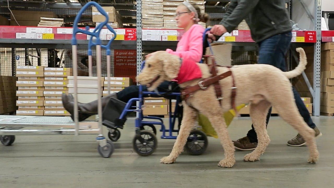 Lovely CONQUERING IKEA IN A WHEELCHAIR! ♿ (10.25.16)   YouTube