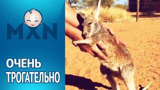 Малыш кенгуру. Трогательные обнимашки (Смотреть видео онлайн HD)