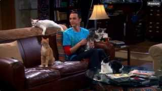 The Big Bang Theory - Sheldon & his Cats