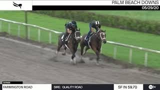 Farmington Road - 2020 Belmont Stakes Contender