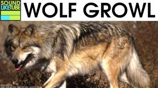 Wolf Growl Sound 2 Hours
