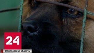 Страшный пожар в собачьем приюте: версии