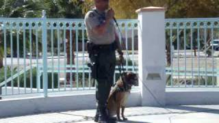 Riverside County Police Attack Dog