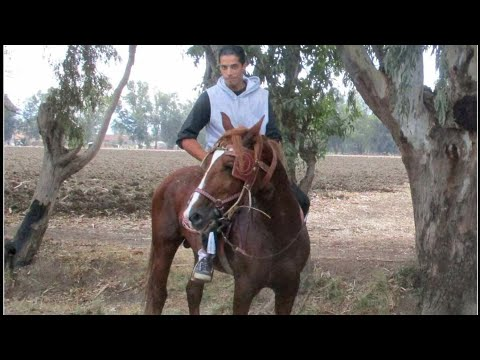 Horseback riding in Algeria