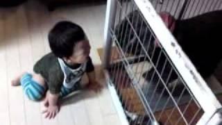 9ヶ月の赤ちゃんのツボは分かりません。 笑われたイングリッシュコッカ...