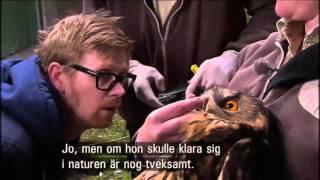 lilla djursjukhuset ssong 1 avsnitt 6 ssong svenska