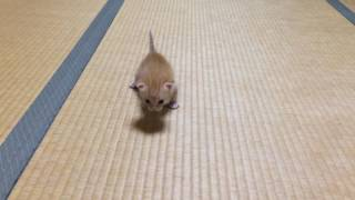 拾った子猫! thumbnail
