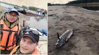 Рыбалка Макса и Аслана в низовьях Чулыма