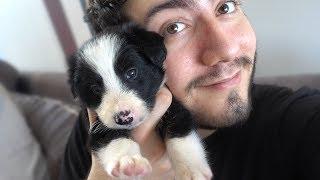 YENİ KÖPEĞİM ''GECE'' (Dünyanın En Zeki Köpeği)