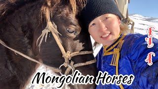 Vlog7. About Mongolian Horses 🐎
