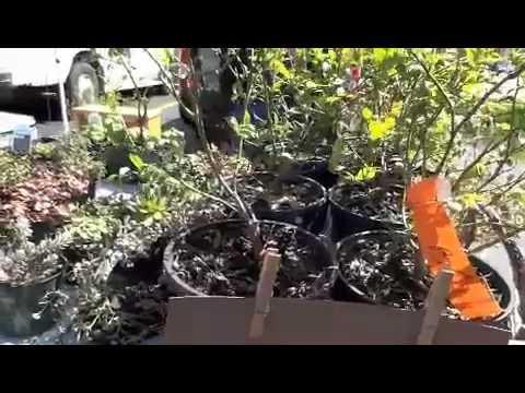 Saturday Farmers Market Trip In Grand Rapids Michigan + Container Gardening Tips