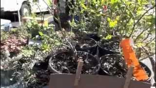 Saturday Farmers Market Trip In Grand Rapids Michigan + Container Gardening Tips