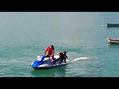 Dos personas examinan la ballena hallada muerta en San Cibrao
