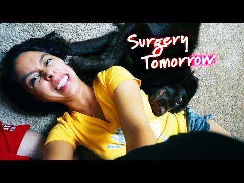 Puppy's Major Surgery: One Take Update | Dog Hip Replacement