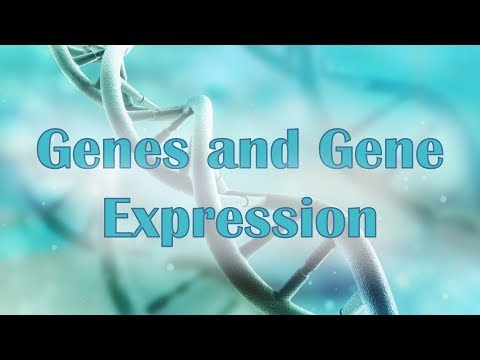 Genes and Gene Expression
