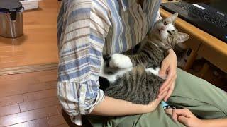 お父さんに肩透かしを食らわす猫がかわいい   Cute cat that disappoints dad.