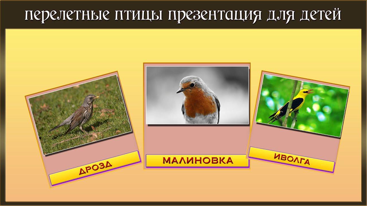 фото улетающих птиц осенью