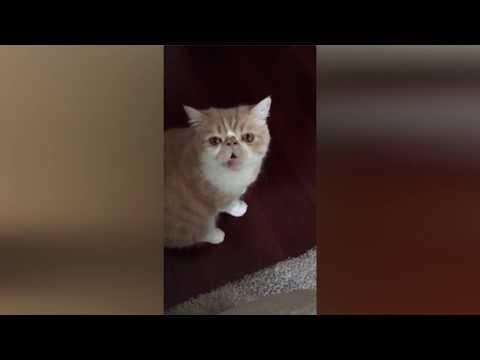 El gato que habla sobre tu sorpresa from YouTube · Duration:  1 minutes 21 seconds