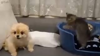 Котик и щенок играют