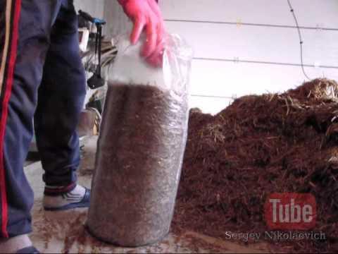 готовые блоки для выращивания грибов вешенка