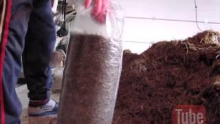 Набивка грибных блоков (вешенка)