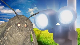 The sad, short lived story of the Moth and the Lamp