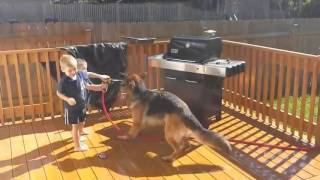 Boys watered the dog. Мальчики поливают овчарку из шланга.