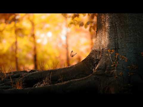 25 minuta Background Music Instrumentals - relaxdaily - relaxing - meditation music