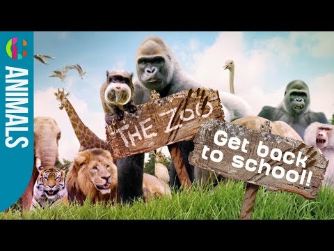 Back to School | The Zoo