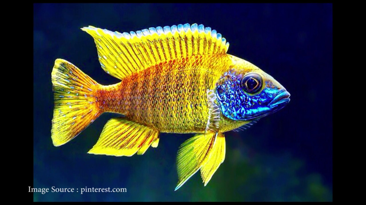 The top 10 cute best looking freshwater fish youtube for Cute freshwater fish