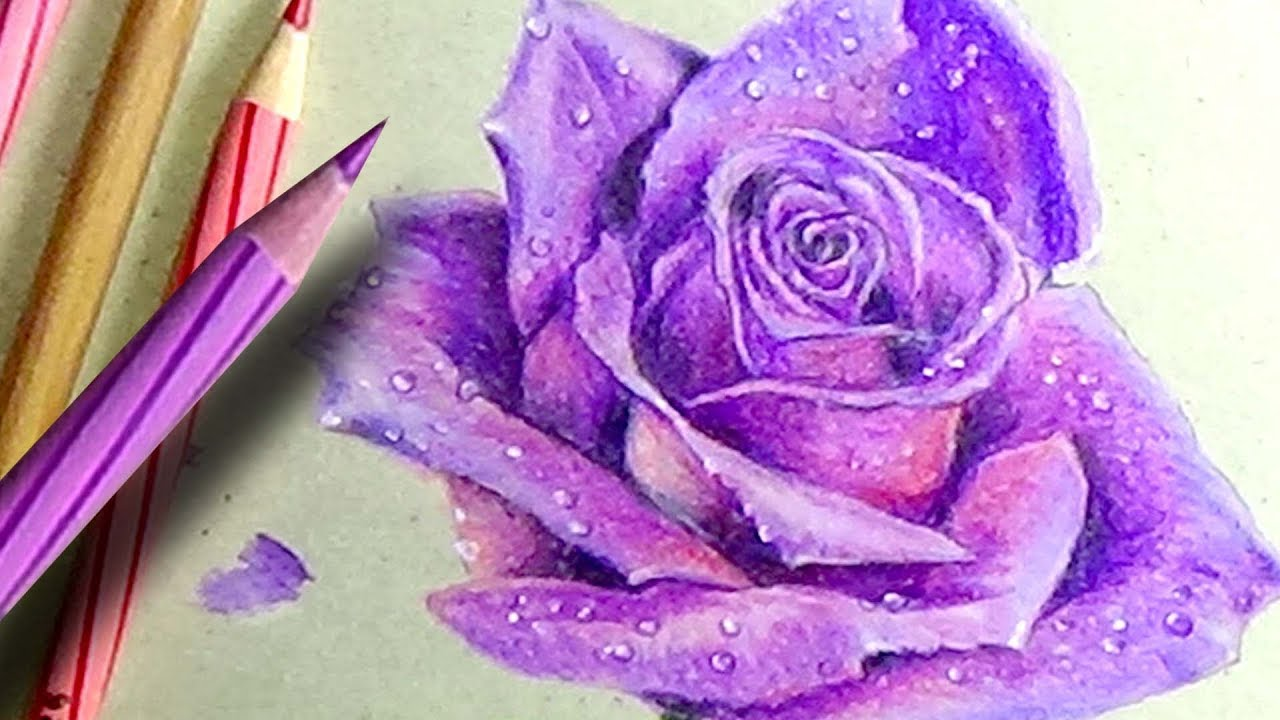 Drawings Of Roses With Color