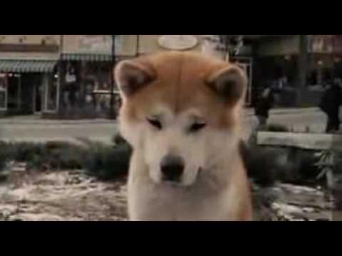 Archie  Film Dog