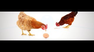 IWS Poultry Installation video