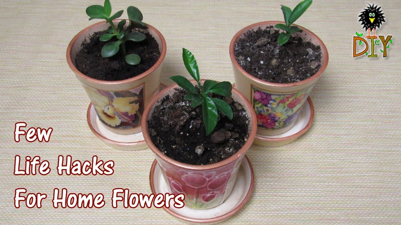 Few Life Hacks For Home Flowers Useful Tips How To Care Indoor Plants