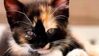 исцеляющие звуки  лучшая музыка  мурчание кошки