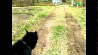 2011年4月現在、13歳6ヶ月になったボースロンのアーネの散歩での足取り ...