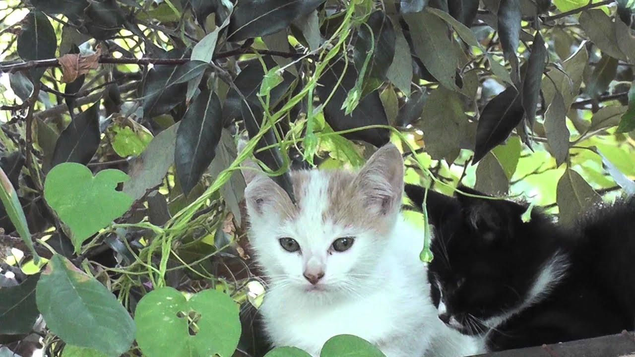 super ultra cute kittens kitty cats white black orange - YouTube