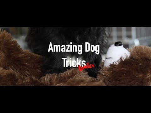 AMAZING DOG TRICKS | TRALIER