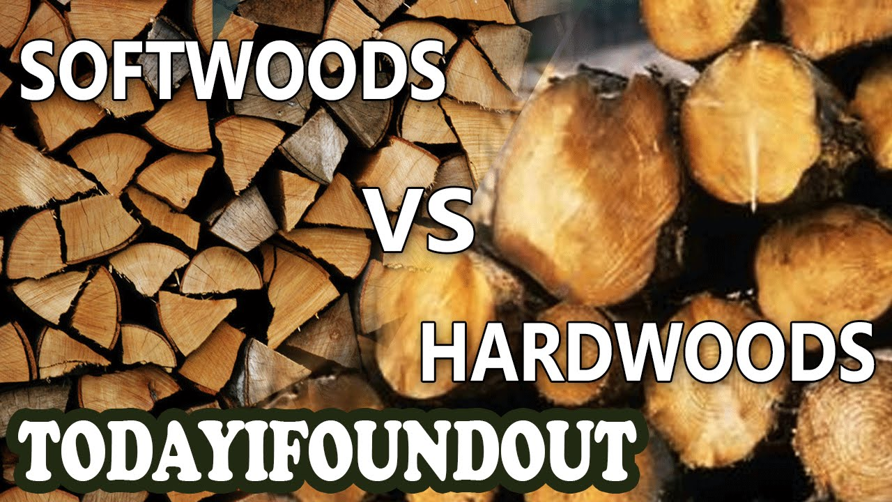 The Difference Between Hardwoods and Softwoods (I Swear, More Interesting Than It Sounds)