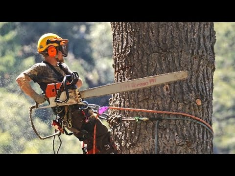 STIHL Chainsaws And Crane Used To Take Down Huge Dead White Fir Tree In Forest Falls CA