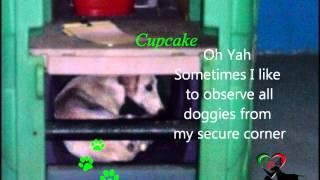 Uae Rescued Dogs, Cupcake Update On 18.08.12, Doggies Palace, Apa Dubai