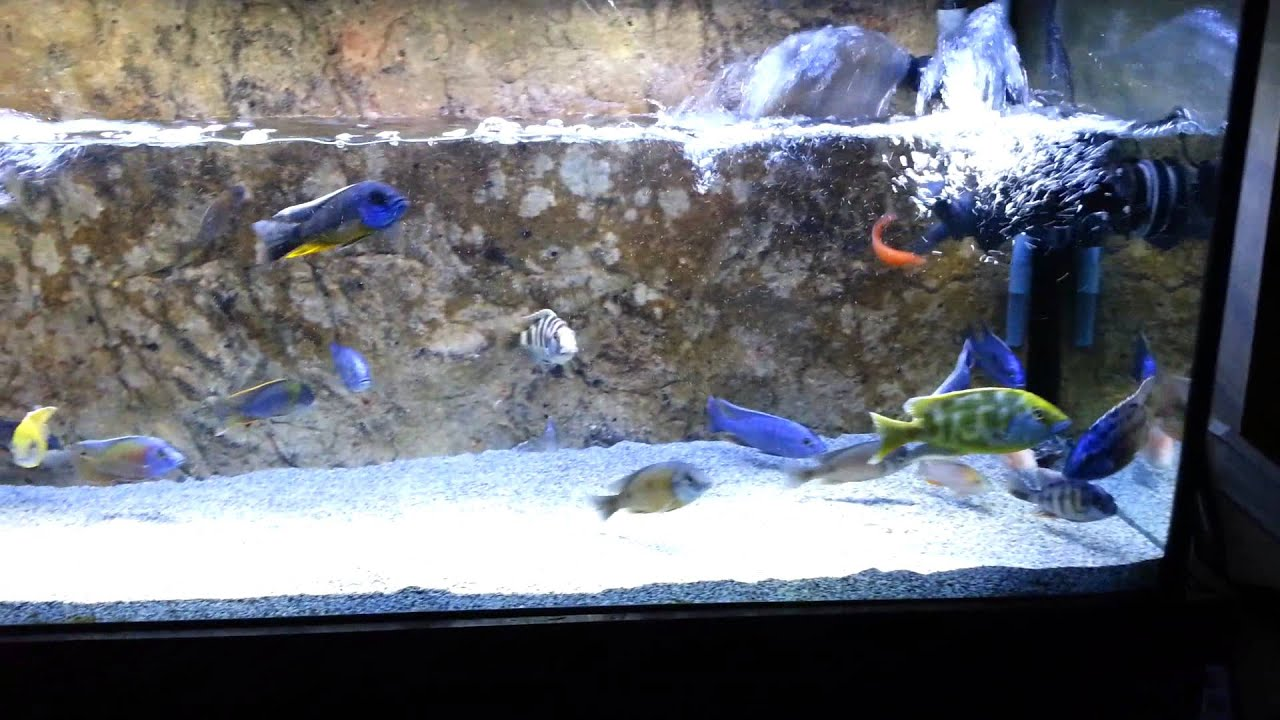 How to clean the rocks in your aquarium youtube for How to clean fish tank rocks