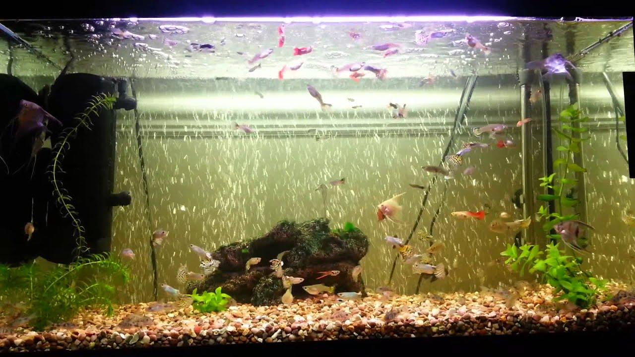 Aquarium fish tank bubble air curtain - Air Curtain