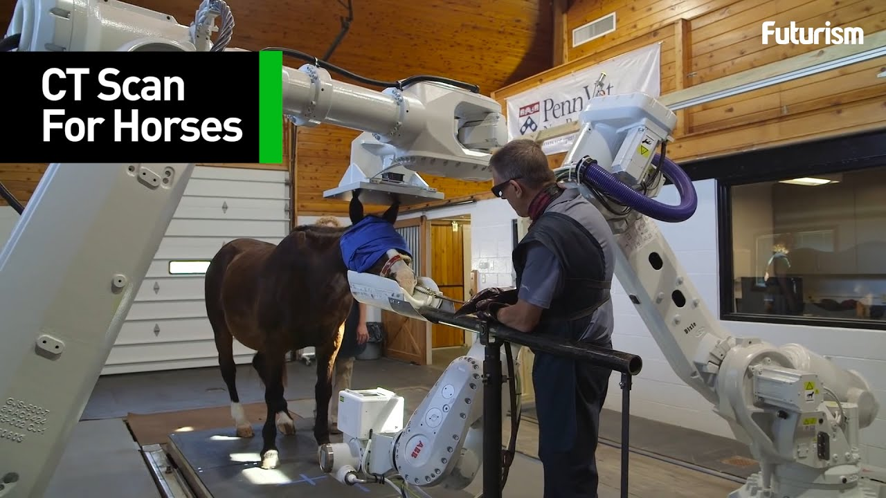 From horses to sheep - MLA invests about $28 million for on