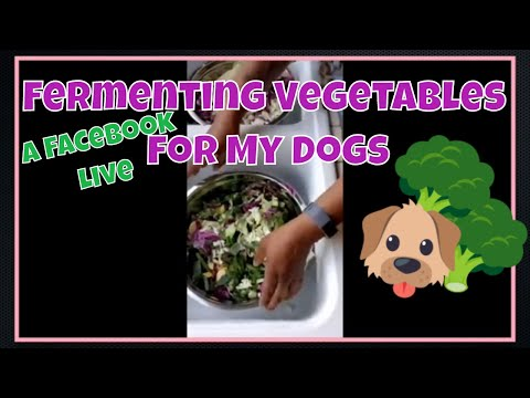 Making Fermented Vegetables For My Dogs [Facebook Live]