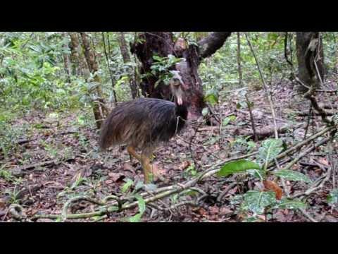 Animals Of The Daintree Rainforest