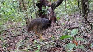 Animals of the Daintree Rainforest