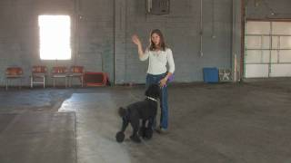 Dog Training : How To Use A Clicker To Train A Dog For Specific Behaviors