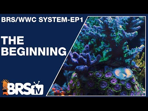 Ep1: How We Setup A Simple And Stable Reef Tank | The BRS/WWC System