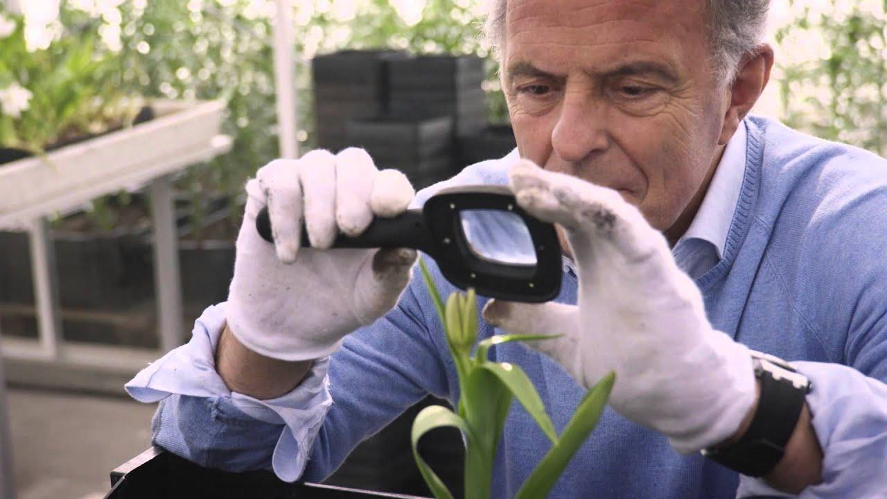 Dit is de trailer van de nieuwe dramaserie zwarte tulp · linda.